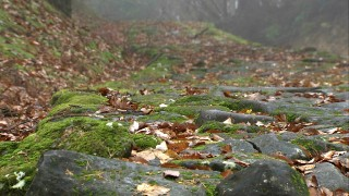 石畳の参道(日本の道百選)