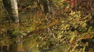 水面に写る紅葉.