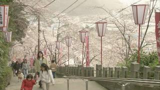桜の階段の先にある金崎宮