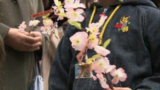 桜の小枝を交換して幸せに