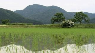 勾当内侍が訪ねた杣山城の城跡(南越前町)