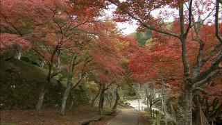 紅葉や桜の名所として知られる花筺公園