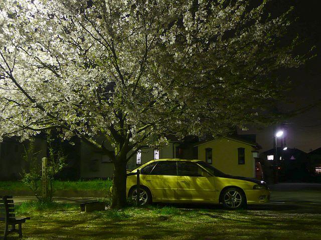 桜2008